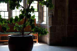 800px-Harthouse_toronto_indoor_tree